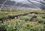 RedSun Hortitech Nursery | Tzaneen , Limpopo